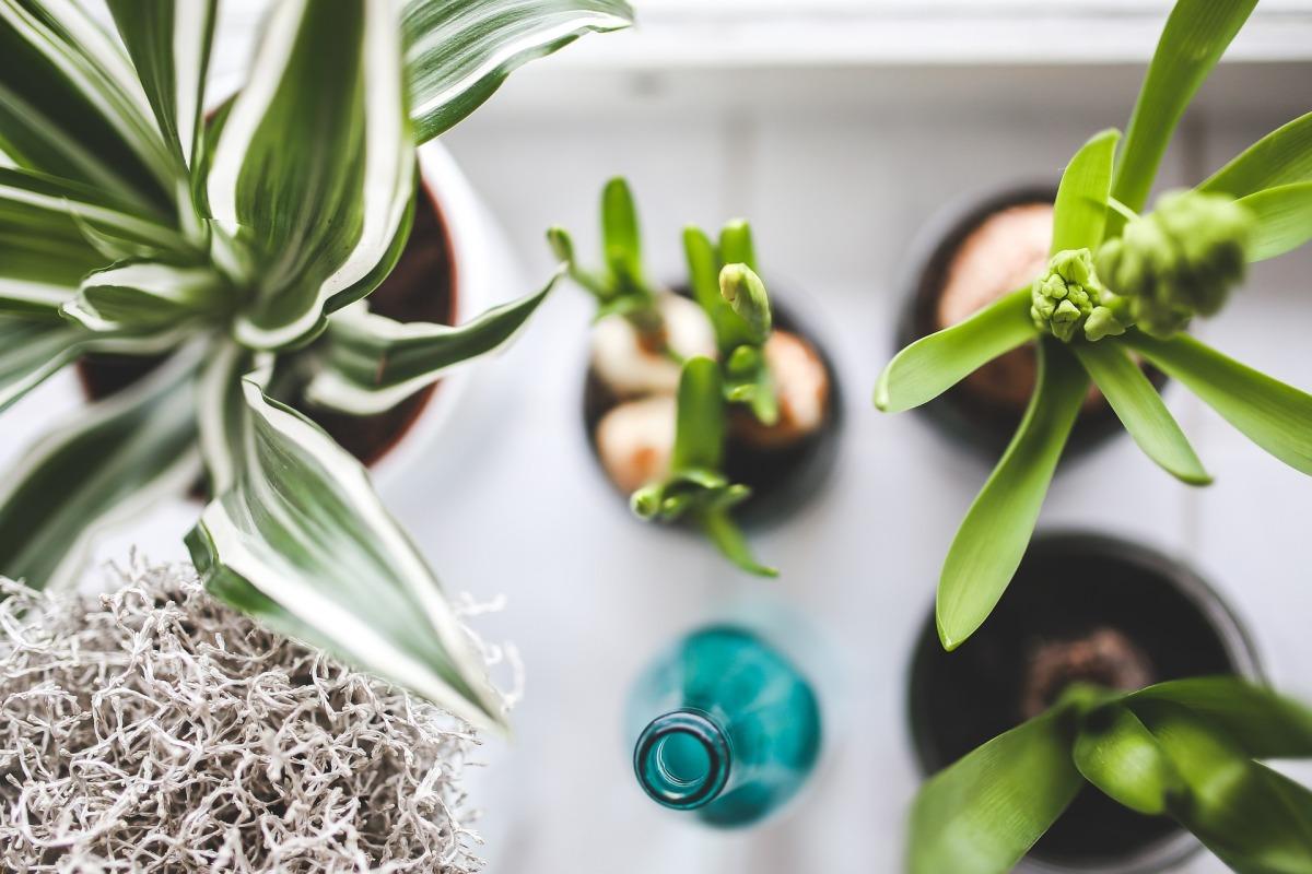 les plantes vertes la mode. Black Bedroom Furniture Sets. Home Design Ideas